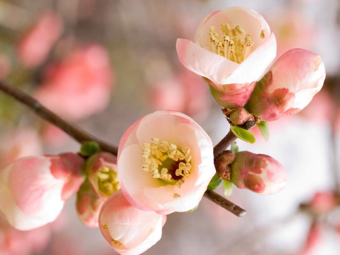 Картинки по запросу цветы весенние