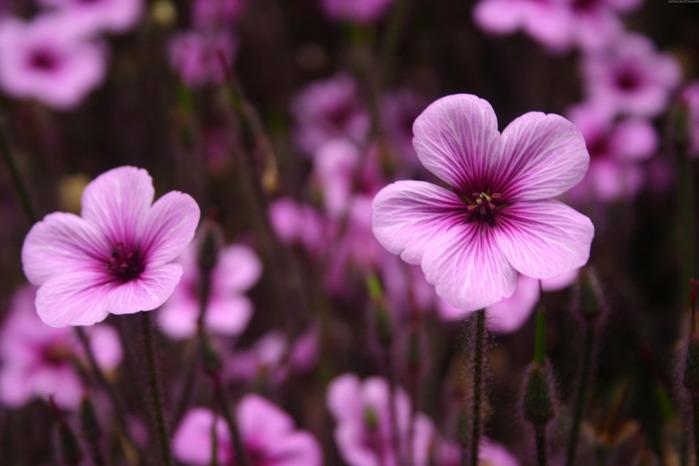 4080226_72318119_springflowers_006 (699x466, 67Kb)