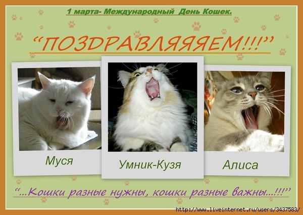 Сценарий с днем кошек