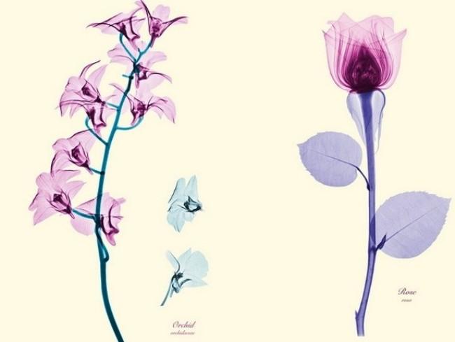 Brendan_Fitzpatrick_flowers_4 (650x489, 38Kb)