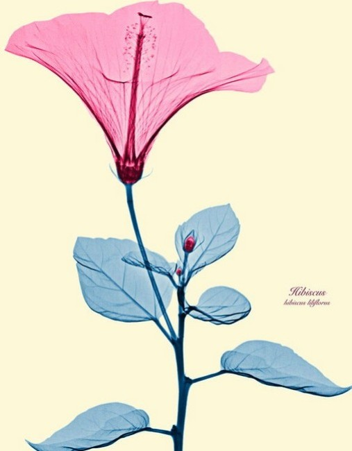 Brendan_Fitzpatrick_flowers_2 (507x650, 42Kb)