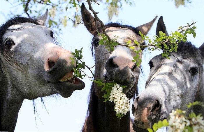 Фото лошади с цветком