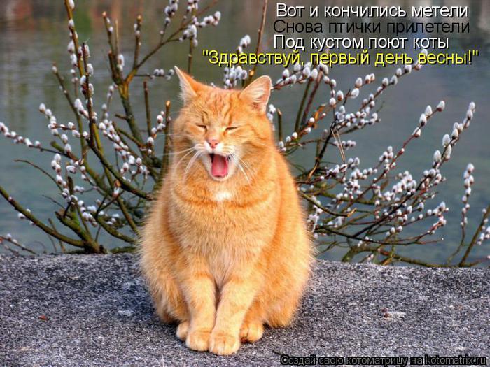 1 марта Всемирный день кошек! - Чеширский Кот - Форум любителей ...