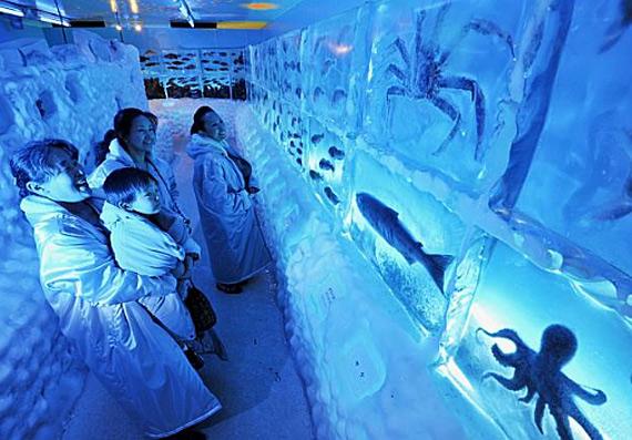 aquarium1 (570x397, 98Kb)