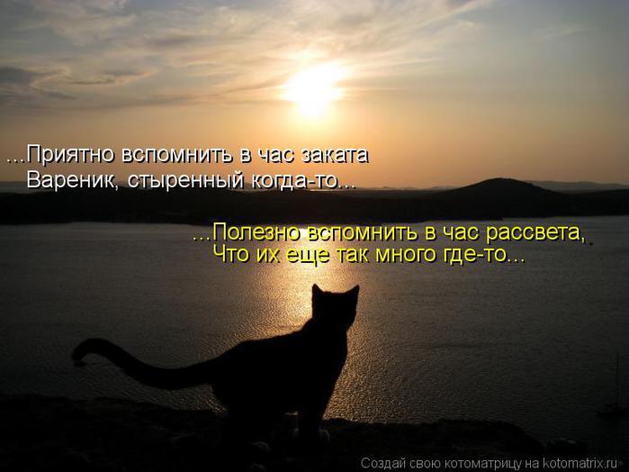 Картинки животных на рабочий стол.  Картинка небо, закат, Кошка, море, силуэт скачать бесплатно.
