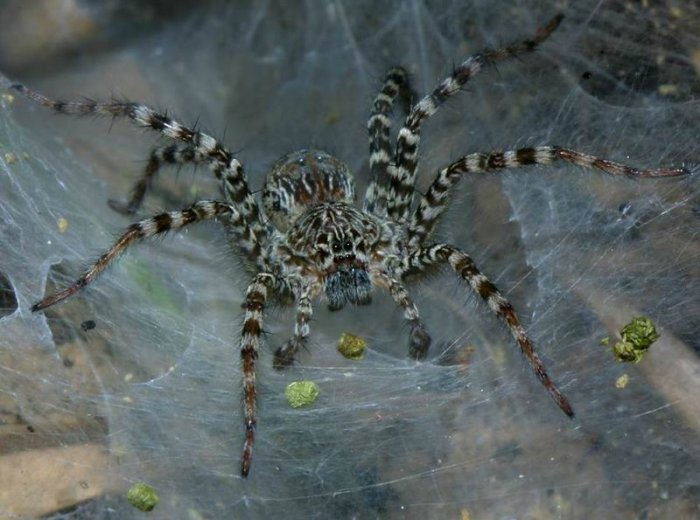 приметы паук на теле ходит или поменяю на