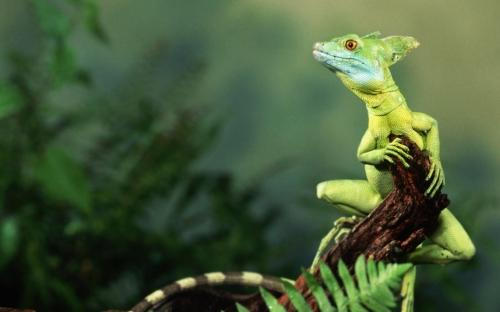 Загадочные рептилии.