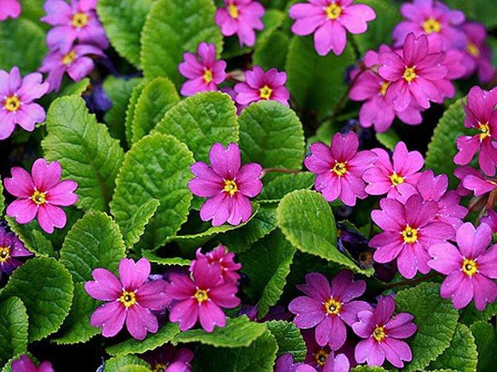 Туника цветы