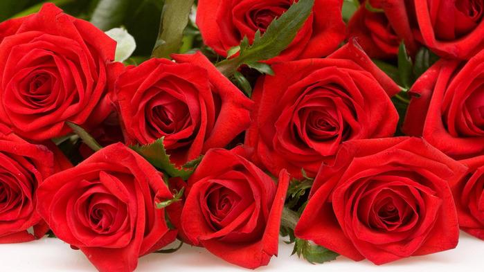 Hd обои красные, розы, Цветы, белый фон 2560 x 1600 для рабочего стола