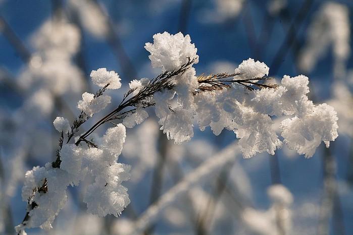 зимние цветы (700x466, 80Kb)