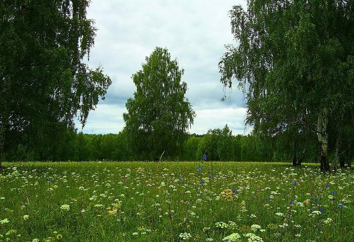 Фото береза и цветы