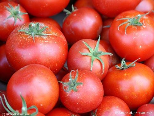 как вырастить большой урожай помидор, секреты выращивания помидоров,/4682845_t_pomidor0 (500x376, 107Kb)