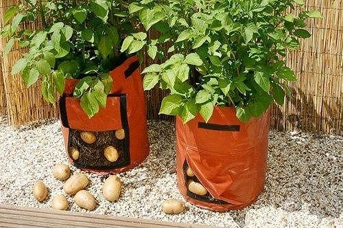 Картофель в мешке (500x332, 283Kb)