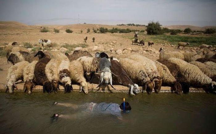 Столб и провода ЛЭП упали на стадо коров, а также другие неожиданные фотографии
