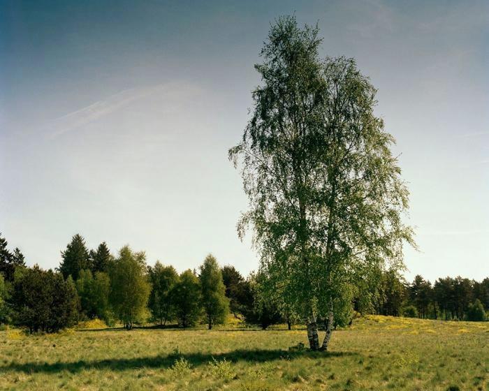 najdite-snajpera-na-foto-0-003-12 (700x560, 184KB)