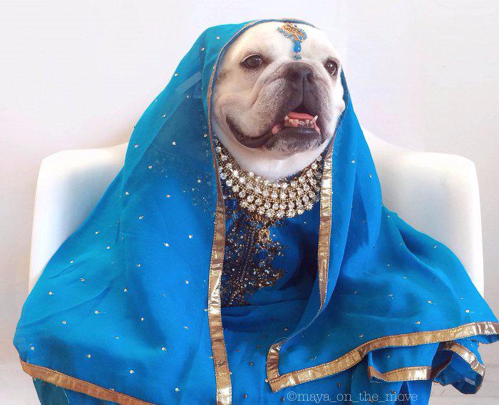 одежда для собак фото 2 (700x568, 319Kb)