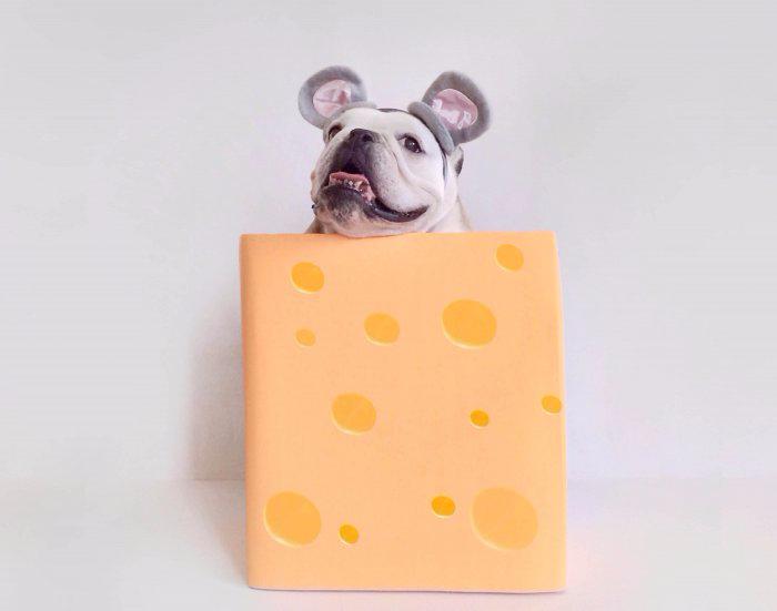 одежда для собак фото 6 (700x551, 116Kb)