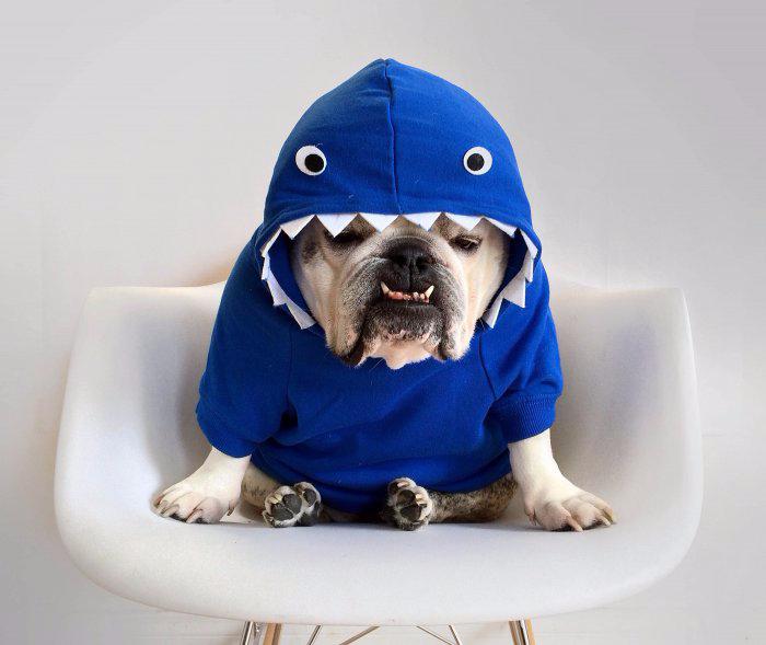 одежда для собак фото 8 (700x589, 209Kb)