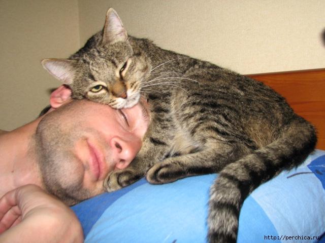 помощь при к чему кошка кусает хозяйку за ноги примета выше