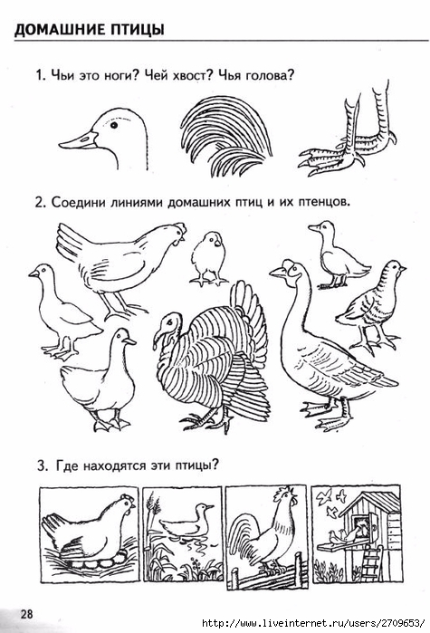 23Домашние птицы и их детеныши раскраска для