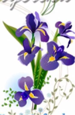 1360185734_iris (250x380, 96Kb)