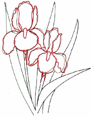 how-to-draw-flowers-and-plants-42 (300x383, 99Kb)