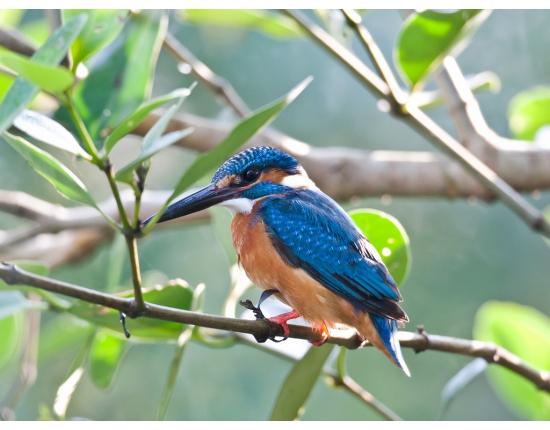 птицы обои 14 (550x430, 238Kb)