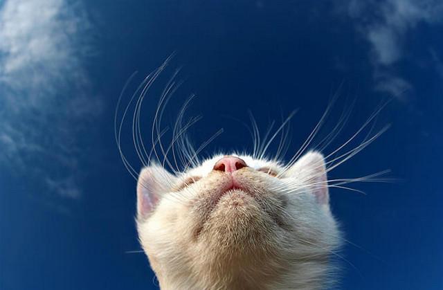 Кошка (640x419, 102Kb)