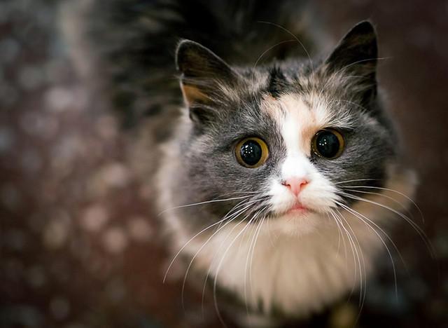 Кошка2 (640x468, 117Kb)