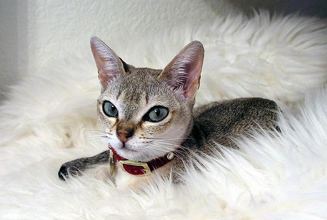 Кошка5 (640x431, 170Kb)