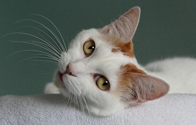Кошка11 (639x409, 100Kb)