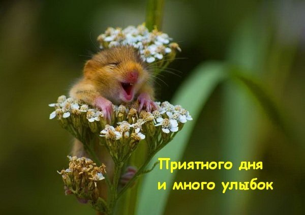 http://img1.liveinternet.ru/images/attach/c/3/122/123/122123501_ju1YR7w8iC4.jpg