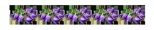 1429785812_0_125f7c_db6c9f85_XL (500x100, 15Kb)