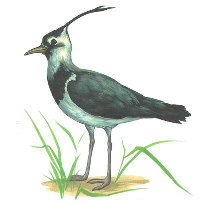 bird11 (400x404, 22Kb)