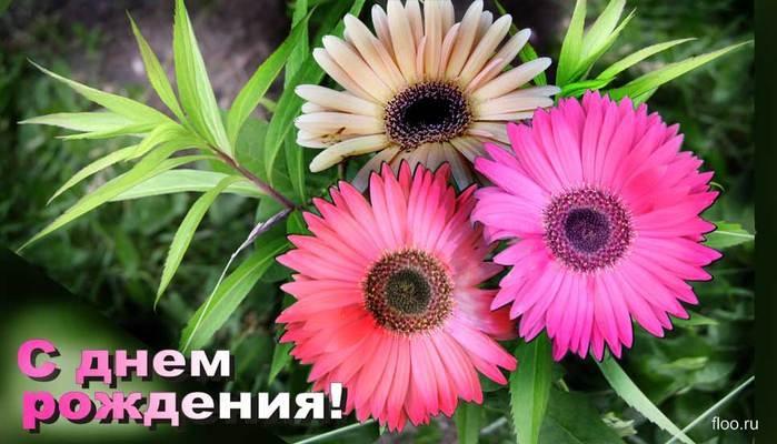 121922029630841431_denj_rozhdenia (699x400, 171Kb)
