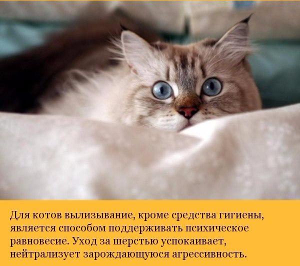 Малоизвестные факты о кошках (600x531, 245Kb)