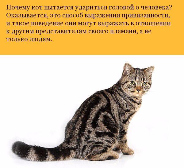 Малоизвестные факты о кошках3 (600x550, 232Kb)