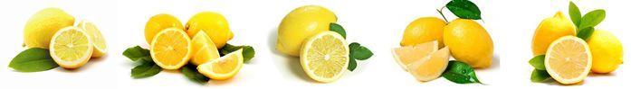 лимон/2719143_12 (697x99, 12Kb)