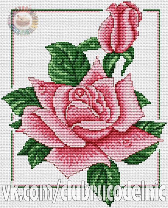 Rose Duet (563x700, 583Kb)