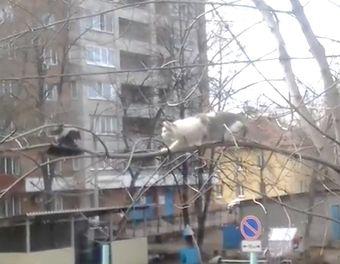 2835299_Vorona_draznit_kota (340x264, 25Kb)