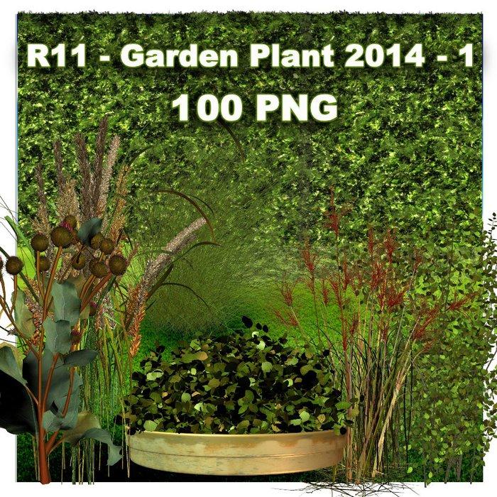 R11 - Garden Plant 2014 - 1 (700x700, 195Kb)