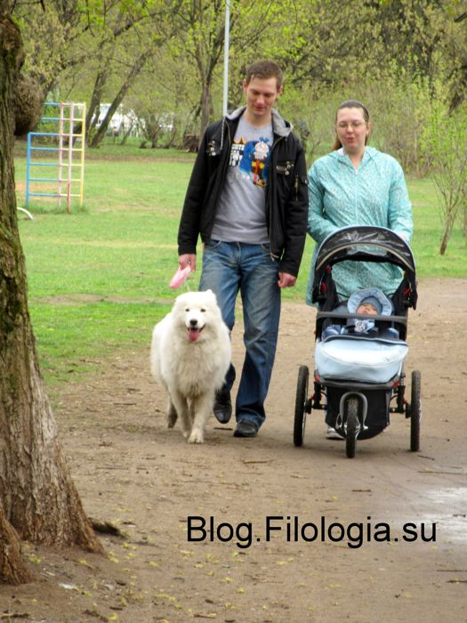 Белая собака на прогулке с хозяевами (525x700, 80Kb)