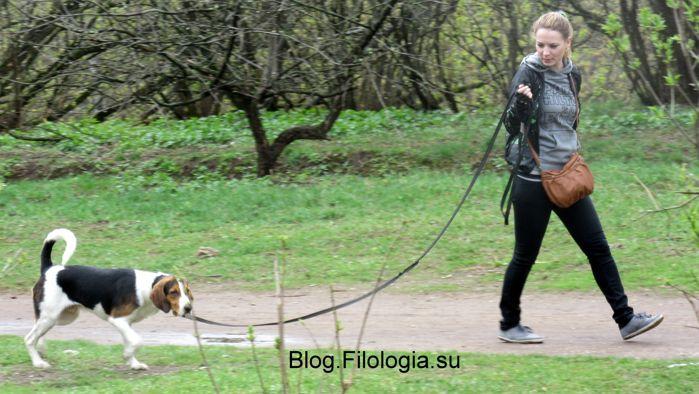 Девушка с собакой (699x394, 63Kb)