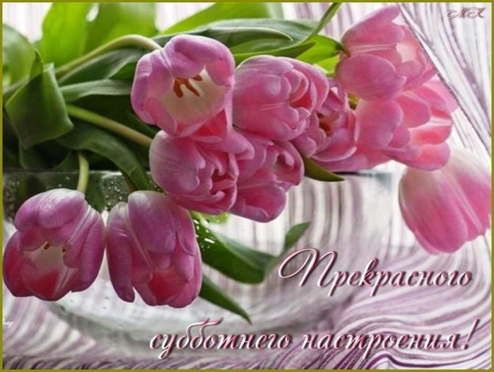 тюльпаны (700x526, 350Kb)