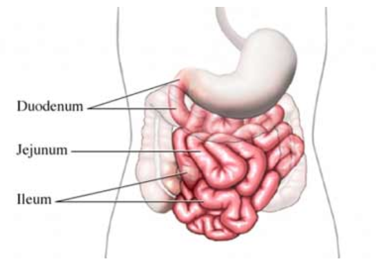 симптомы, лечение и диета