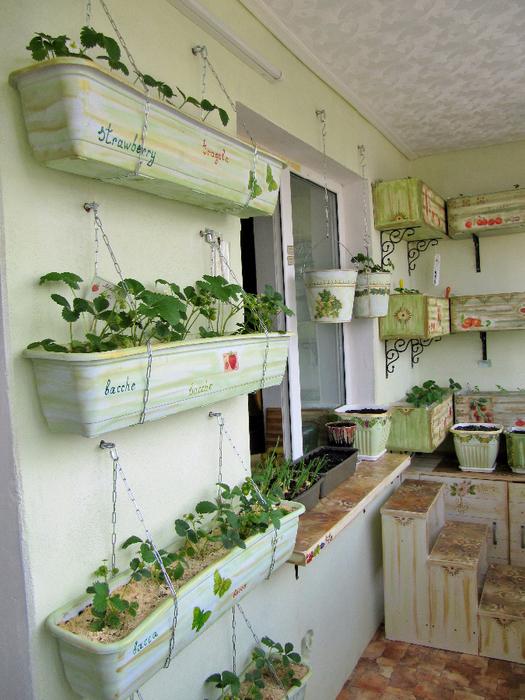 Как на балконе вырастить клубнику