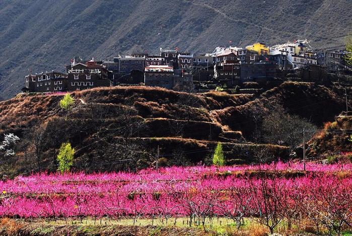 Цветущие персиковые сады2 (700x468, 538Kb)