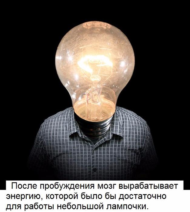 10 удивительных факта о человеческом мозге2 (627x700, 269Kb)