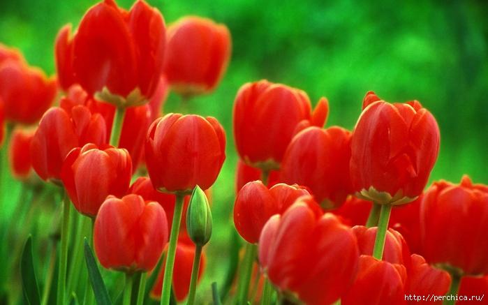 4979645_kartinki24_ru_spring_57 (700x437, 224Kb)