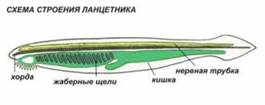 ХОРДА1 (527x210, 56Kb)